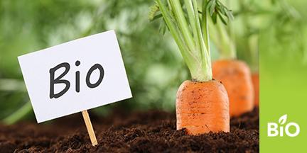 Karotten ragen aus Erde heraus, daneben ein Schild mit Aufschrift