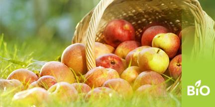 Liegender Korb aus dem Äpfel herausrollen