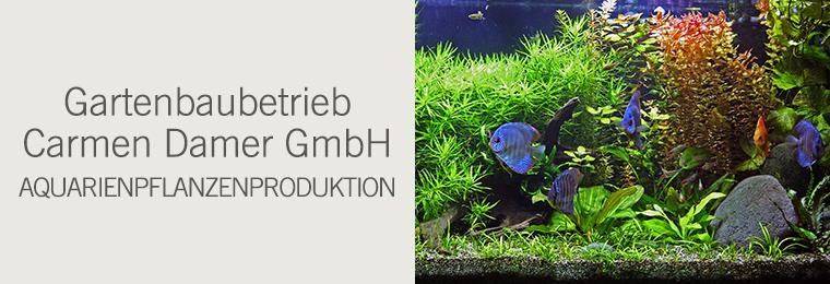 Gartenbaubetrieb Carmen Damer GmbH - Aquarienpflanzenproduktion