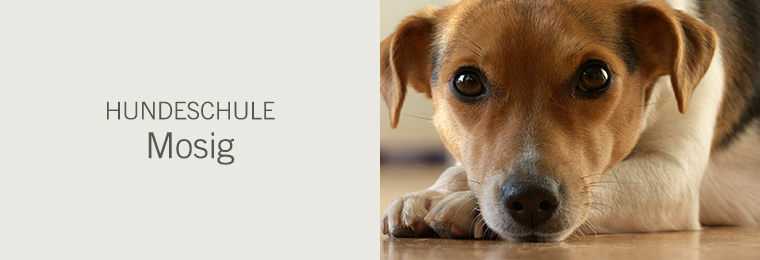 Hundeschule Mosig