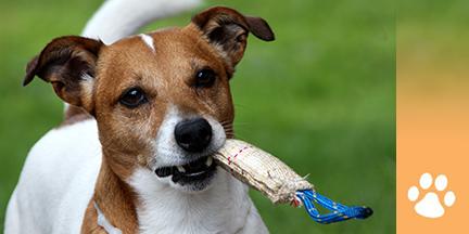Hund mit Spielzeug in Schnauze