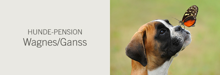 Hunde-Pension Wagnes/Ganss